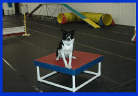 Dog agility training and doggie day care flooring get rung interlocking foam mats
